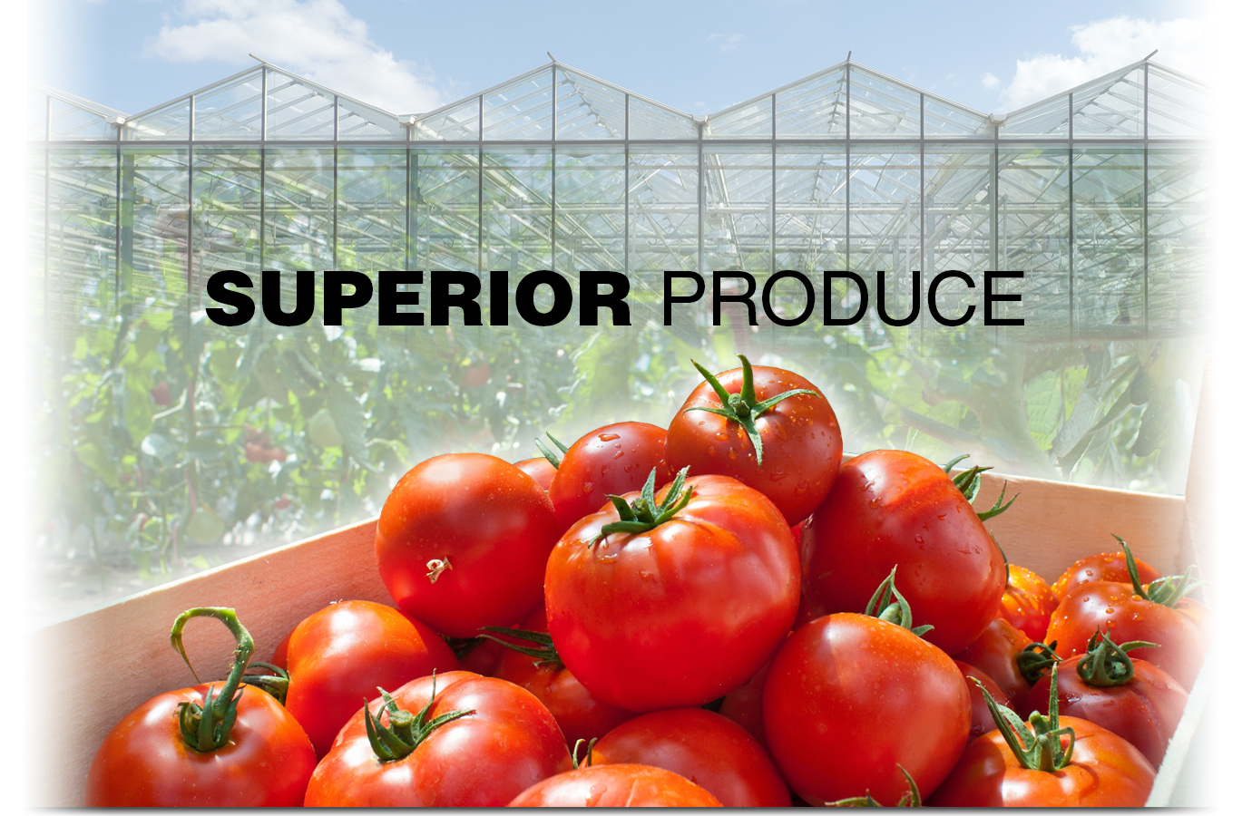 Use Grassoline Organic fish fertilizer for Superior Produce