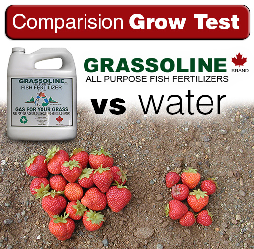 Grow healthier veggies with Grassoline Organic Fish Fertilizer
