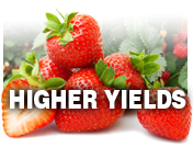 Get higher yields with Grassoline