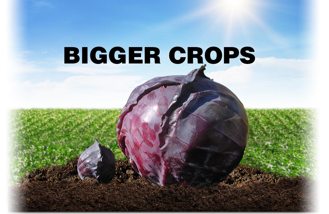 Use Grassoline Organic fish fertilizer for bigger crops