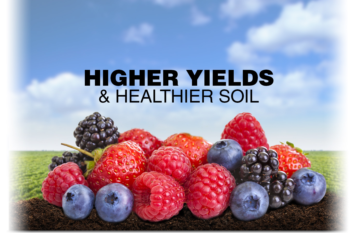 Use Grassoline Organic fish fertilizer for Higher yields and healthier soil